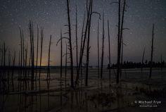 Trees and stars, Lower Geyser Basin, Yellowstone NP, WY, USA