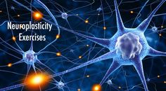 Neuroplasticity Exercises :http://clickstartyourbusiness.com/neuroplasticity-exercises/