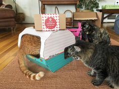 Playtime with the Kitty Camper! The purrfect cat play house and cat toy for all aged cats.