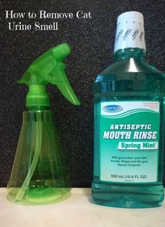 The best homemade carpet cleaner recipes pinterest diy carpet how to remove cat urine from carpet removes odor and bacteria in a flash solutioingenieria Choice Image