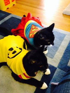 We got some pictures of previous foster kittens from their adoptive families celebrating Halloween! Coconut was adopted last spring and is dressed as a vampire. Milkshake and Moonshine were adopted last fall and are rocking Robin and Superwoman costumes!