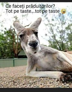Kangaroo, Jokes, Lol, Funny, Cute, Animals, Internet, Baby Bjorn, Animales