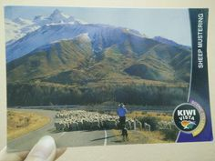 A heart-warming postcard all the way from New Zealand. ♥