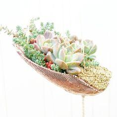 Maui Succulent Designs