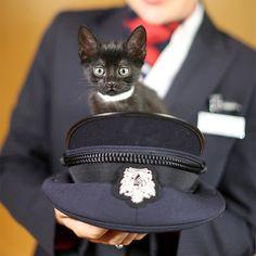 Cute Animals Help Passengers Relax on British Airways - Carry On | Travel + Leisure