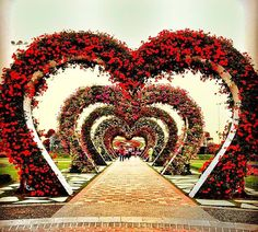 The Hearts Passage at the Dubai Miracle Garden is the most famous floral theme. It has been part of the Dubai Miracle Garden since its first day and today it is still part of the Dubai Miracle Garden. The heart passage comprises of arches of hearts that bloom flowers and have arches which resemble the shapes of heart. Growing Flowers, Large Flowers, Real Flowers, Geranium Plant, Geranium Flower, Heart Structure, Million Flowers, Three Color Combinations, Miracle Garden