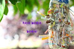 Bird Nest Material