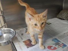 ADOPTED - Kyle - URGENT - PIKE COUNTY ANIMAL SHELTER in Pikeville, Kentucky - ADOPT OR FOSTER - Young Male Domestic SH Mix