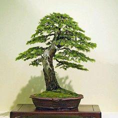 359 Best Bonsai images in 2019 | Bonsai art, Asian garden
