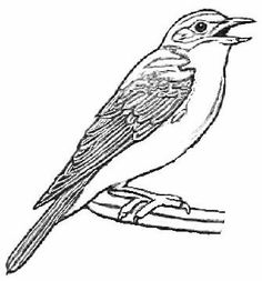 Bird and nest coloring pictures of a a colouring pages for Eastern bluebird coloring page
