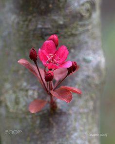 Trees and Flowers - Ağaçtan Çiçeğe