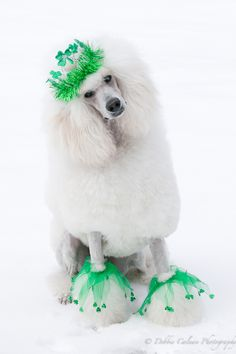 I don't usually like costumes or coloring poodles hair but this is sweet to me.