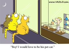 cartoons+about+love | Cartoons - Postdoc & Cats - Biology Jokes - Best Science Cartoons ...