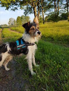 Hunde Foto: Anne und Lucky - Kleiner Poser Hier Dein Bild hochladen: http://ichliebehunde.com/hund-des-tages  #hund #hunde #hundebild #hundebilder #dog #dogs #dogfun  #dogpic #dogpictures