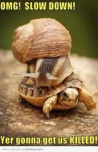 32517c4d2ede4ce3e780af46b1d7ea21 slow down snails funnyturtlepicturs imposters will be nommed turtles eating a