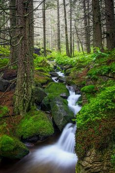 Forest and waterfall in the Tatry Mountains. Poland