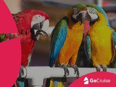 Schräge Vögel abseits von Karneval? Schaut mal, wo wir dieses bunte Gefieder entdeckt haben: https://www.gocruise.com/de-DE/kreuzfahrten-suche?destinations=8f3aa535-9561-11e6-b91a-0242ac110002&selectedPage=2  #Kreuzfahrtlust #GoCruiseCom #Karibik #Fernweh  #Cruise #Destination #Hafen #Port  #Urlaub #Reiselust #Urlaubsreif #Kreuzfahrt #Reiseziel