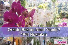 Orkide Bakımı Nasıl Yapılır? Hiç bir yerde bulamayacağınız! Püf Noktaları Son yıllarda hayatımızı orkide bir giriş yaptı ki ne giriş evdeki baş çiçek orkide oldu, aslında bunu da hak ediyor çiçeklerin prensesi denir orkideye. Orkideniz çiçek açtığınızda bizlerde mutlu oluruz, resmini çekip arkadaşlarımızla paylaşırız, ancak orkide başını bükünce bizde üzülürüz. Bu sebeple orkidelerimiz için en … Farmer, Orchids, Flowers, Plants, Botany, Indoor House Plants, Farmers, Royal Icing Flowers, Flower