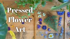 Pressing Flowers Between Glass - Cottage Vlog Pressed Flower Art, Press Flowers, You're Awesome, Flower Wall, Dried Flowers, Art Lessons, Arts And Crafts, Crafty, Wall Art