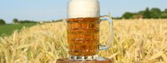 Campsites near Brewery Tours https://www.campsitechatter.com/specialisms/campsites-near-brewery-tours