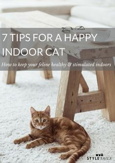 How to keep an indoor cat happy and stimulated. // cat care // brain games for cats // cat toys Cool Cats, Benny And Joon, Gatos Cool, Cat Hacks, Cat Info, Kitten Care, Cat Care Tips, Cats Diy, Cat Behavior
