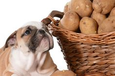 Can Dogs Eat Potatoes Safely? What About Sweet Potatoes? https://link.crwd.fr/kQn