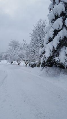 Winter Pictures, Nature Pictures, Strange Weather, Frozen, Snowy Weather, Winter Love, Pop Art, Winter Magic, Winter Scenery