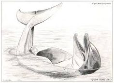 Image result for animal sketches