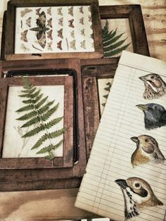 Love these vintage collectibles!!! Bebe'!!! This would make a great collection display of flora and fauna charts!!!