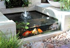 Inspirations Modern Indoor Fish Pond Design To Decoration Your Home Inspiring Fish Pond Idea With Glass Wall And Chic Solar Power Fountain Pool Pump And Green Water Lettuce Floating Plant