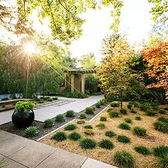 Zen retreat from Sunset Magazine: Clumping Berkeley sedge dots the yard, while spiraled Aloe polyphylla and asparagus ferns line the drive. Japanese maples and dogwoods, planting beds mulched with tumbled glass in shades of blue and green and buff-colored decomposed granite.
