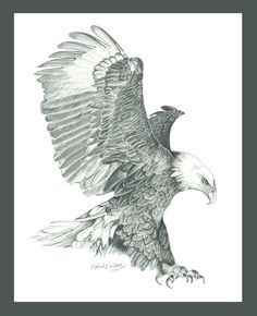 fineartamerica.com eagle  | Keyword