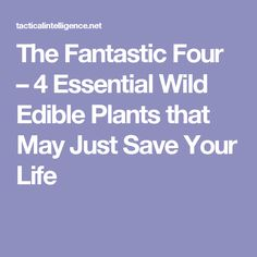 The Fantastic Four – 4 Essential Wild Edible Plants that May Just Save Your Life