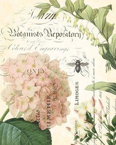 Spring Study Collage Plate 3 - Botanical Art Print 11x14