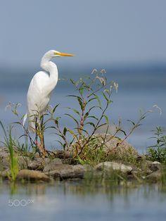 egret                                                       …