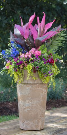 Pink Color Fest: striped canna, lacy asparagus fern, 2 varieties of purple coleus, & creeping jenny.