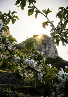 "Foto 18 ~ ""Primavera"""