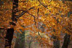 Fall at Albergaria woods (Gerês)