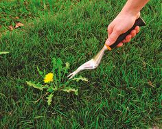 Weeding 101: Get'm While They're Young