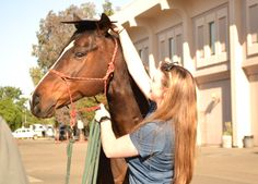 how to begin equine clicker training improve horse human communication life skills for horses book 1 english edition