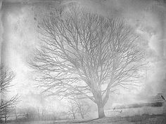 "The Winter Solstice in My Soul.  Series ""Trees"" by Nellie Vin, via Flickr"