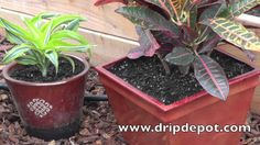 How to Setup a Drip System for Container Gardening