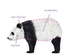 howtodrawbears-2-4-panda-silhouette