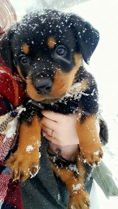 Somebody has been playing in the snow!