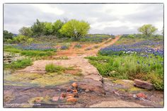 Here's one from the Willow City Loop down in the Texas Hill Country snapped on April 4, 2015. If wildflower season is as good as everyone thinks it's going to be this year, I anticipate 3 or 4 road trips to the hill country in a few months.