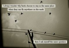 Quotes About Birds 15 Best My Life Images On Pinterest  Vegan Humor Vegan Quotes And .