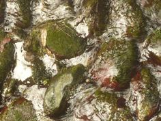 a mossy river, the geometry of nature,  #abstract #summer