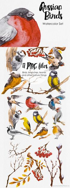 Stunning 17 Hand painted #Watercolor #Birds #ClipArt #Illustrations #Freebies for this week only! All individual Elements have a transparent background download now➩ https://creativemarket.com/AnnaFaun/895321-Watercolor-Russian-Birds?u=Datasata