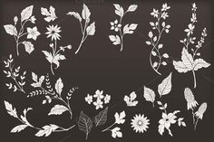 Hand drawn botanical vector elements
