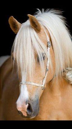 #Horse #Animals
